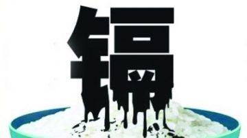 王维洛:镉大米和土壤污染