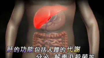 【走近韩医】调节新陈代谢的脏器-肝脏