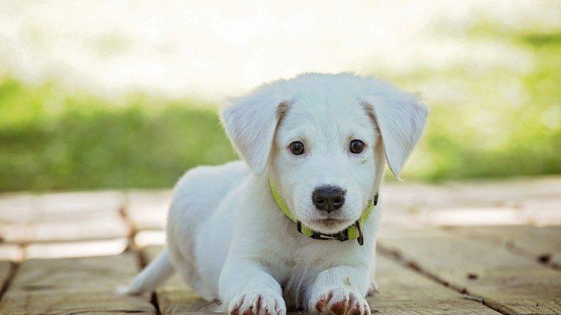 人被狗追的时候,为什么人只要一蹲下狗就会跑?看完解开多年疑惑