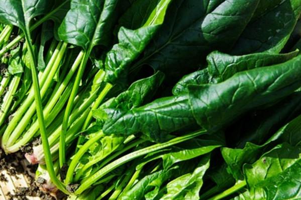 靠水保鲜的蔬菜 你知道有哪些