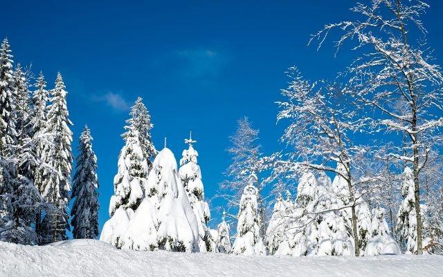 冬至大如年 阳生春又来