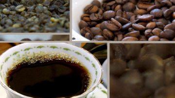 【你好韩国】咖啡之中有自然