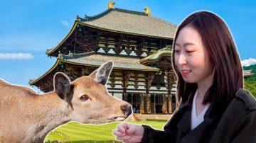 慧秀在日本:与中国有渊源的奈良东大寺 与 怀石料理