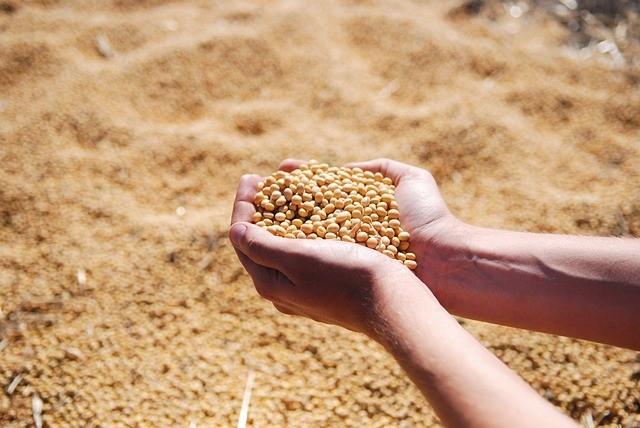 美大豆获欧盟大订单 中国被巴西大豆高价痛宰