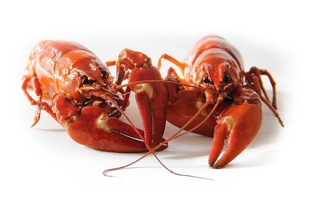柏林小龙虾泛滥危害生态 中国吃货:我来拯救德国!