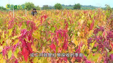 美丽心台湾:鲁凯族张志纭 领家族种红藜
