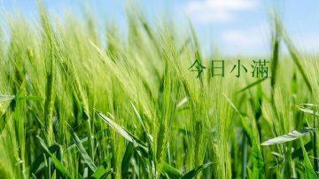 小满玉簪布庭前 农家养蚕又种田