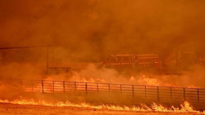 加州野火失控 消防车被大火包围 牛群四处逃窜