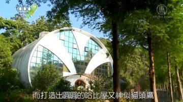 1000步的缤纷台湾:苗栗三义 超梦幻!猫头鹰造型哈比屋