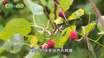美丽心台湾:在自然中学习 黎旭瀛夫妇力推自然农法