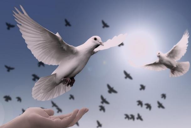 古代信鸽怎样传递信件 飞鸽传书原来这么传奇(视频)