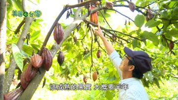 美丽心台湾:赖锡贤的可可巧克力梦