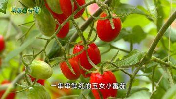 美丽心台湾:鸡舍变农场 篮耕玉女蕃茄