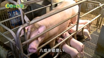 美丽心台湾:猪粪变黄金 农牧绿能串联创奇迹