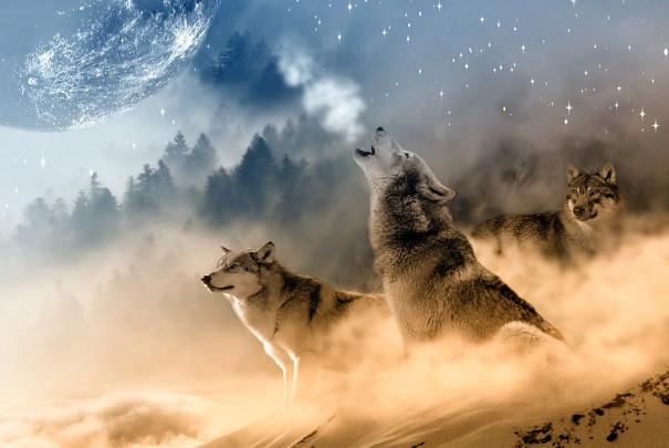 神灵异事:给恶狼当军师的悲惨下场(数文)