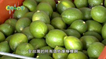 美丽心台湾:海龙蛙兵李智泽 从商场转战农场