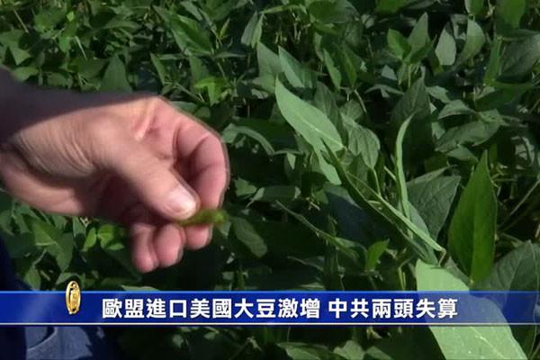 中共票仓战术遇挫 美农业谈判代表:农民们没动摇