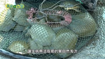 美丽心台湾:无毒养鳖 谢育咨多元经营创商机