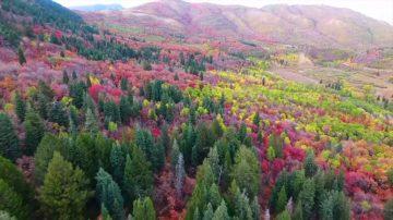 """新闻放轻松:秋天到来叶色斑斓 法国人用落叶""""滑雪"""""""