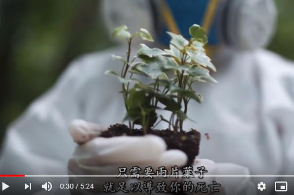 世界上最毒的植物 两片叶子就可导致死亡(视频)