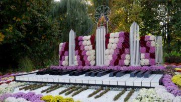 乌克兰音乐主题菊花展 游客惊喜流连