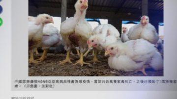 11月22日全球看中国