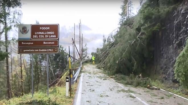暴风雨席卷意大利酿17死 数千公顷森林遭破坏