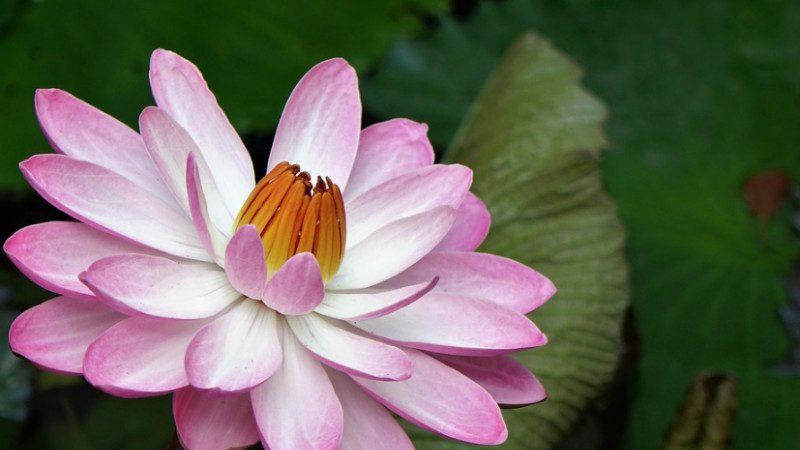 神传汉字看人生运道(十四)对中华文化的渴望