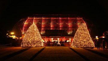 迎假日季  柏林植物园点亮灯饰 灿烂夺目