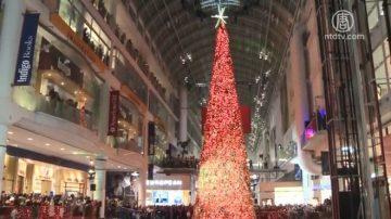 多伦多伊顿中心点亮108英尺圣诞树