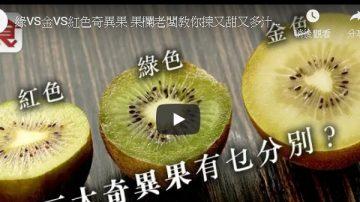 三大奇异果:绿色、金色和红色 营养有何分别(视频)