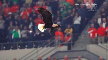 美国大学橄榄球赛 白头海雕突袭抢风头
