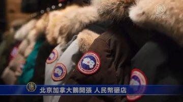 【微视频】北京加拿大鹅开张 人民币砸店