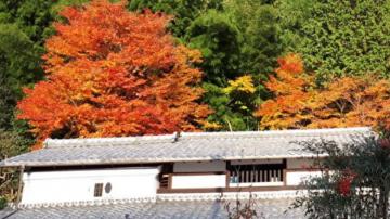京都风致寻唐风古韵 处处寺庙瓣瓣心香