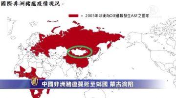 中国非洲猪瘟蔓延至邻国!蒙古沦陷