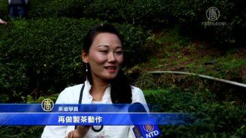 游台湾梅山太和茶区 体验传统茶文化