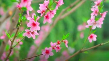 除夕逢迎立春 传统节气