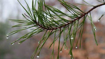 春风送暖来 雨水节气至