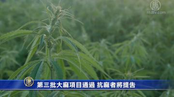 第三批大麻项目通过 抗麻者将提告