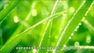 喝新茶 走百病 谷雨时节的传统习俗